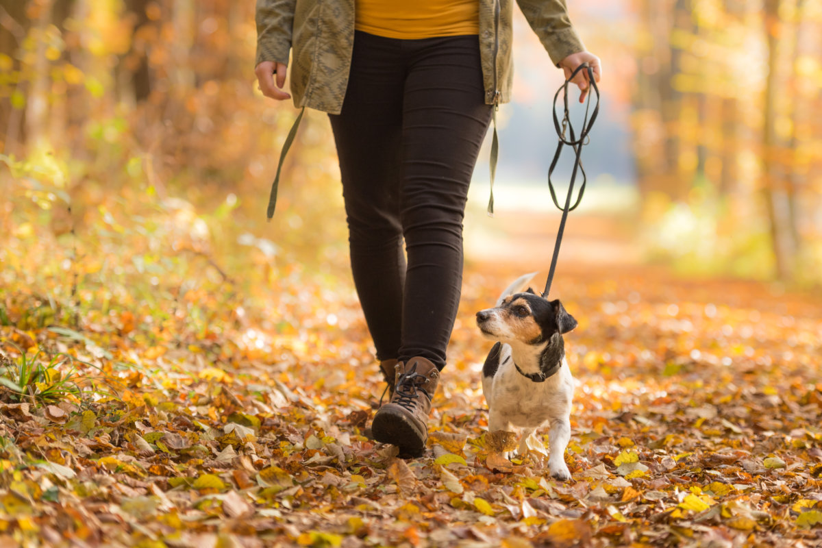 person walking on trail with dog